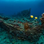 Scuba Travel, The Barge, Red Sea