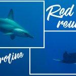 Scuba Travel, Red Sea