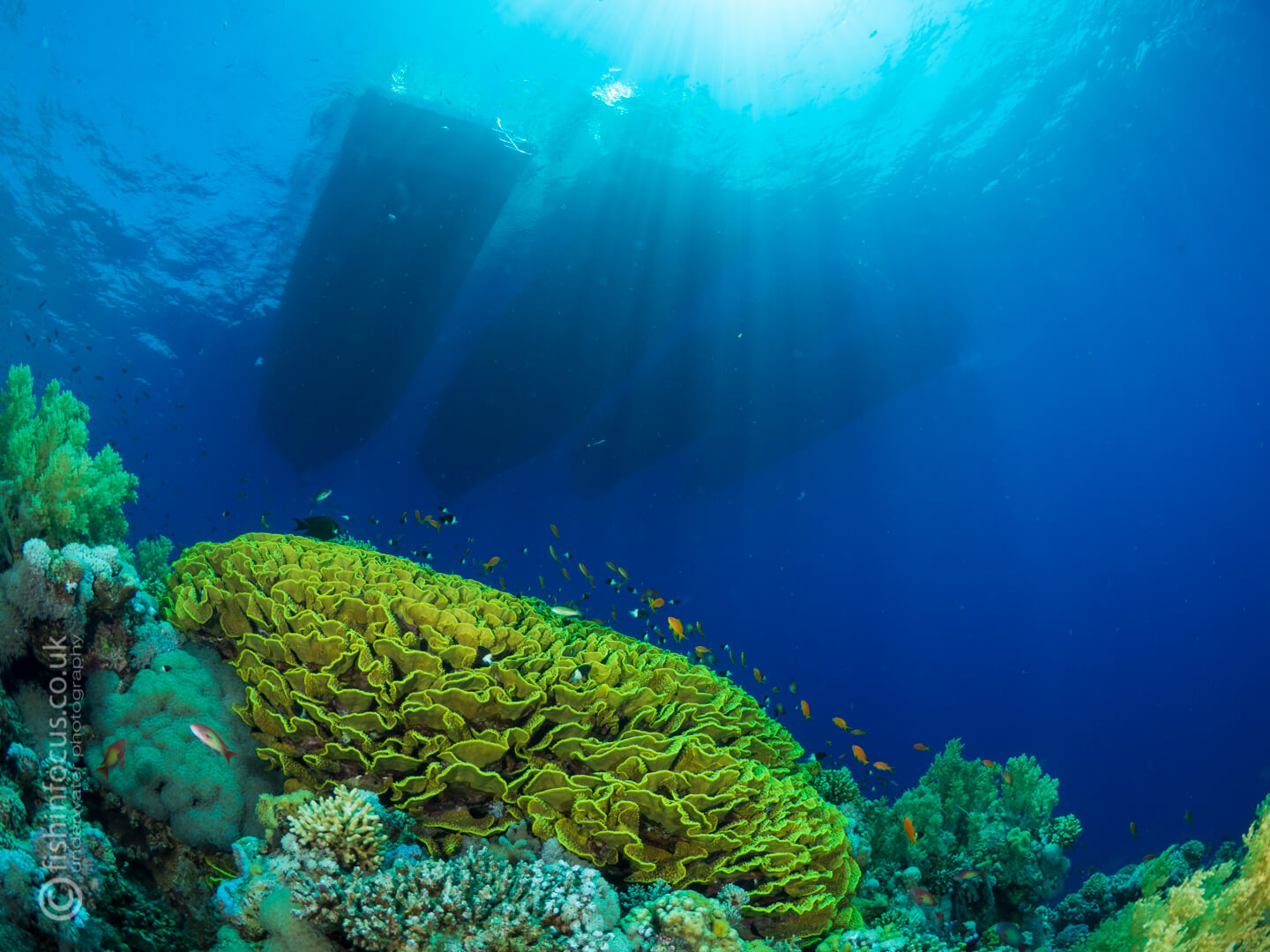 Scuba Travel, wrecks and reefs, Red Sea, Whirlwind
