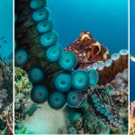 Scuba Travel, photography