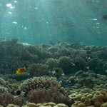 Scuba Travel, Dappled light, Red Sea, Sunbeams