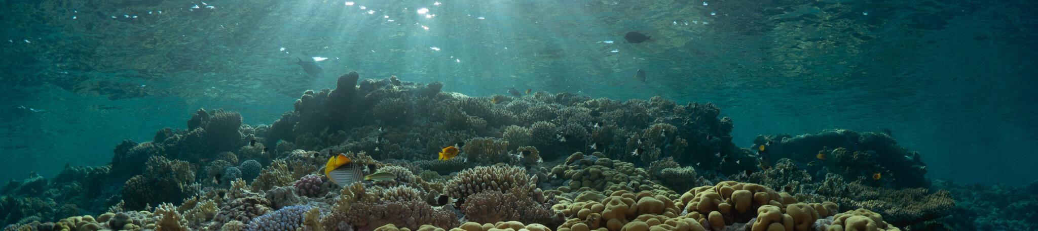 Scuba Travel, Dappled light, Red Sea, Sunbeams