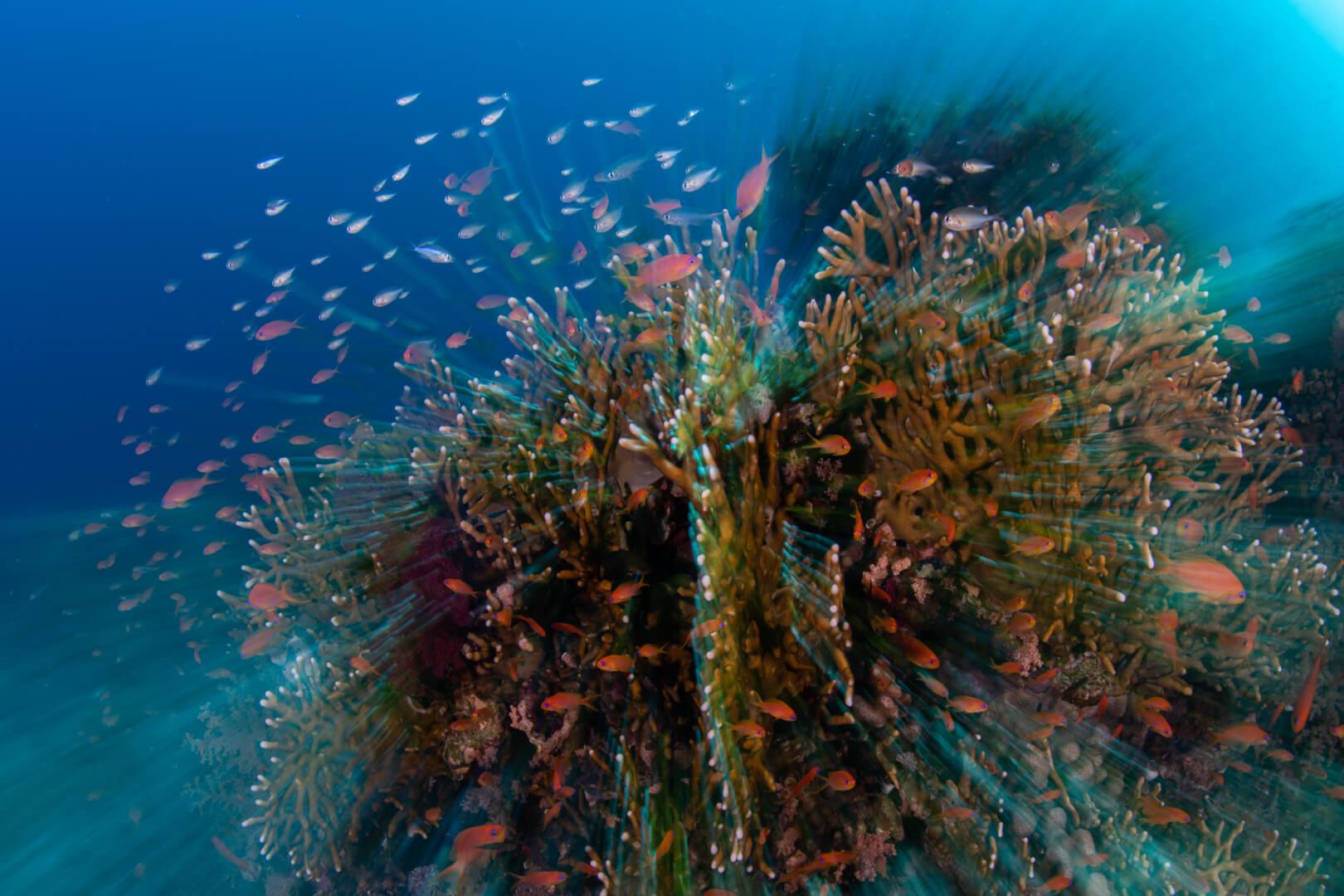 Scuba Travel, Red Sea, Shark and Yolanda, soft corals, Wrecks and Reefs