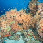 Scuba Travel, Diving holidays, Red Sea, Egypt, Tiran