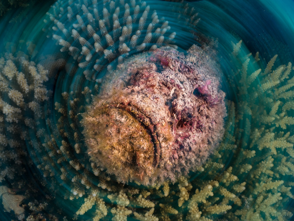 Scuba Travel, Red Sea, Egypt, live aboard, diving holidays, stonefish