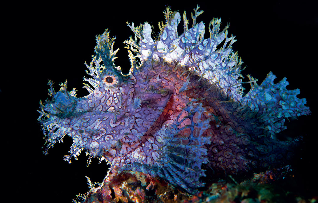 Scuba Travel, diving holidays, scuba diving, macro photography, Rhinopia, Philippines
