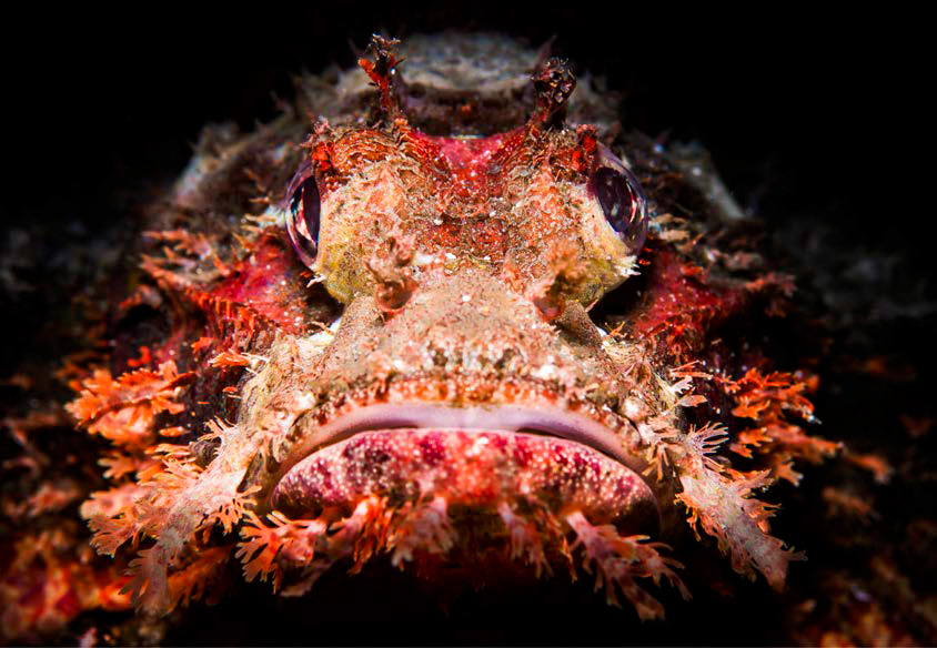 Scuba Travel, diving holidays, underwater photography, Red Sea
