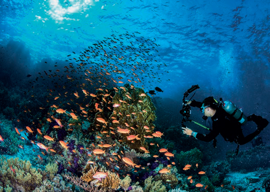Scuba Travel, Diving holidays, Caribbean, Red Sea, Liveaboards, Egypt underwater photography